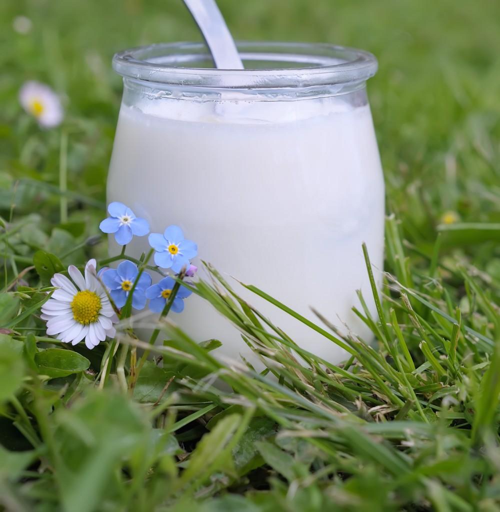 yaourt fait maison,dittique et sant